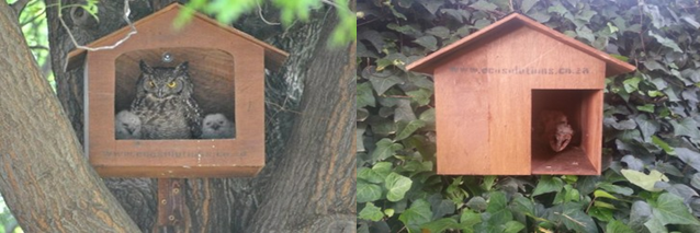 Examples of occupied owl houses